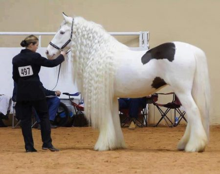 صور حصنة (2)