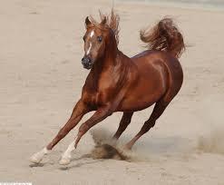 صور حصنة