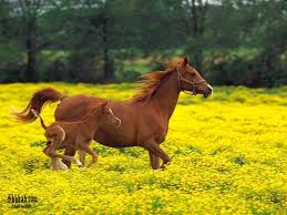 صور للحصان