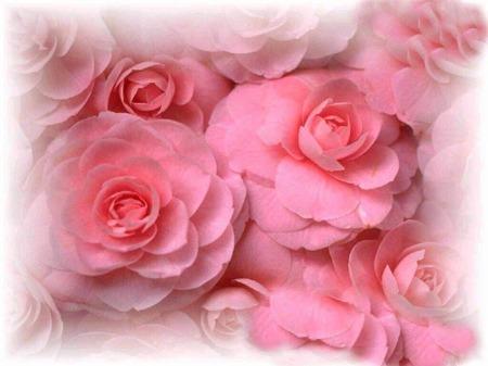صور وردة روز