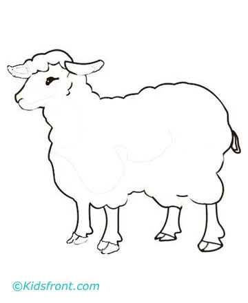 كاريكاتير عيد الأضحي (8)
