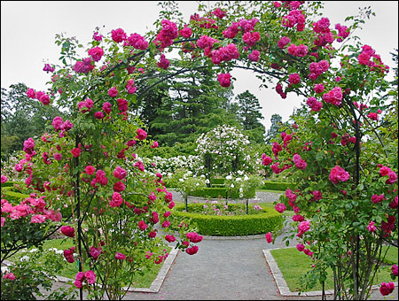 تصميم حدائق فلل