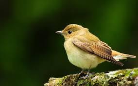 احلي صور طيور