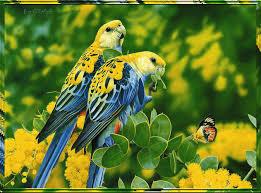 ارقي صور طيور (2)