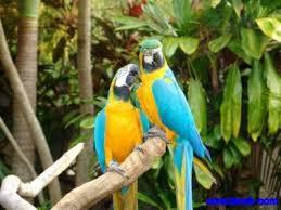 ارقي صور طيور