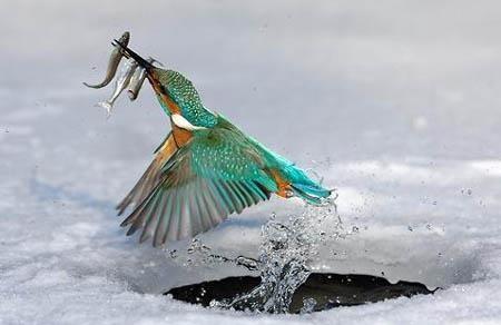 تحميل صور طيور (2)