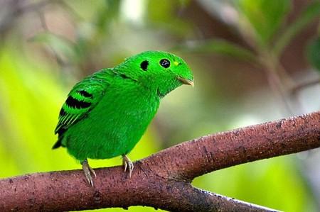 تحميل صور طيور