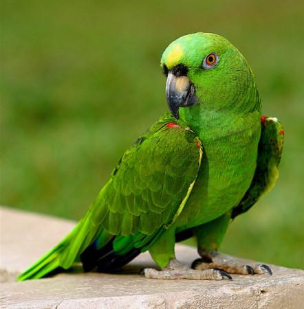 صور طيور اخضر