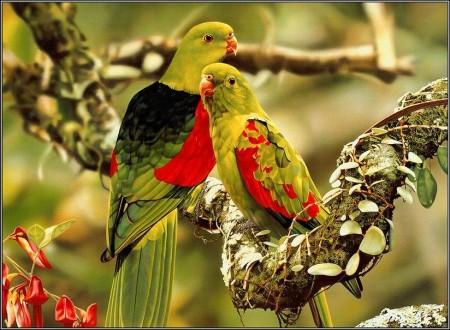 صور طيور الزينة (2)