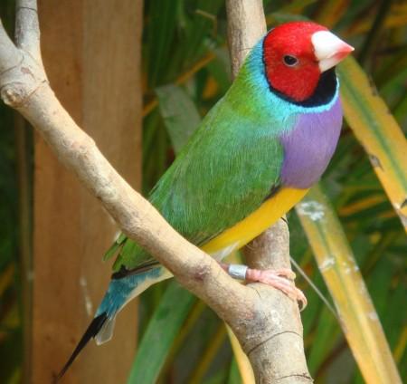 صور طيور تحفة