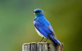 صور طيور جميلة اوي