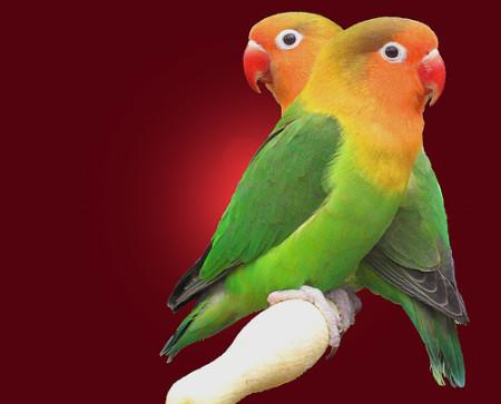 صور طيور رائعة