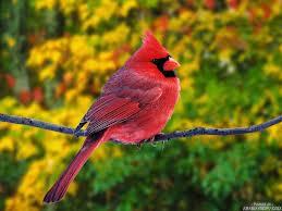 صور طيور شيك