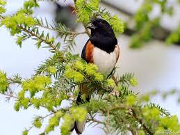 صور طيور وشجر