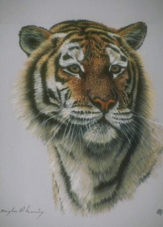 اجمل صور حيوانات (4)