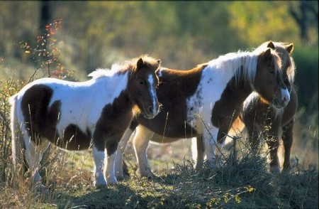 اجمل صور حيوانات (7)