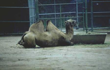 اجمل صور حيوانات (9)