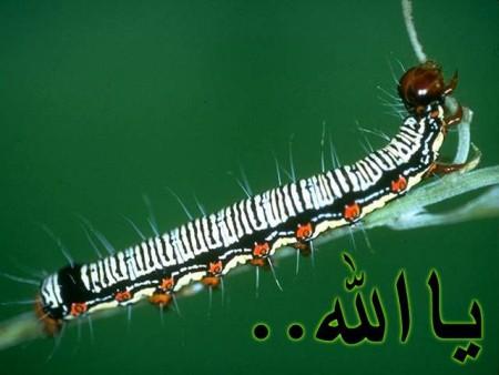 البوم صور دينيه واسلامية (1)