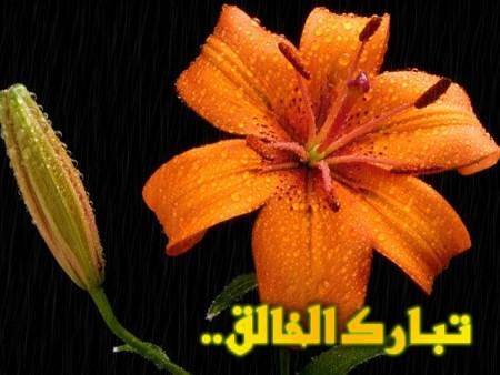 البوم صور دينيه واسلامية (12)