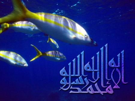 البوم صور دينيه واسلامية (5)