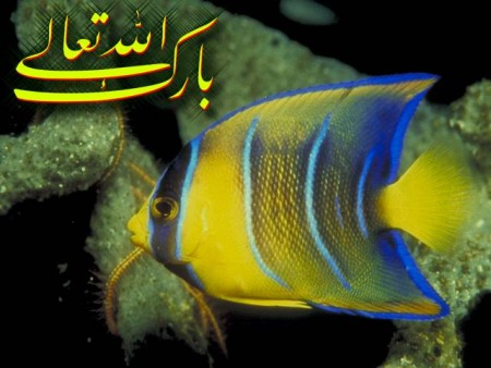 البوم صور دينيه واسلامية (8)