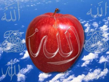 صور اسلامية (31)