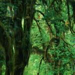 صور الطبيعة (1)
