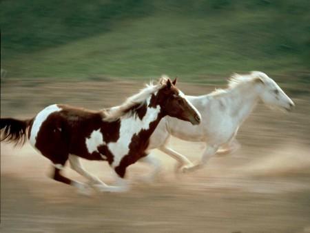 صور حيوانات جميلة (3)