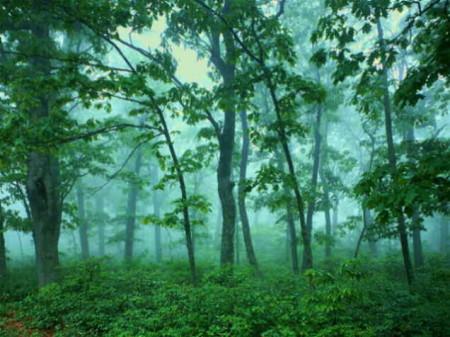 مناظر من الطبيعة (3)