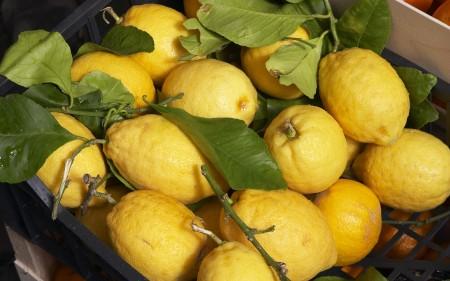 الليمون (4)