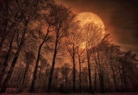 خلفيات القمر والليل وخلفيات الغروب (1)