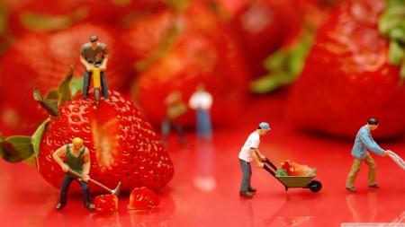 صور خلفيات فراولة (4)