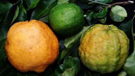 صور فاكهة ليمون (5)