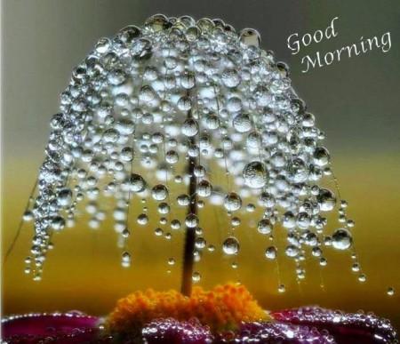أجمل صور صباح (1)