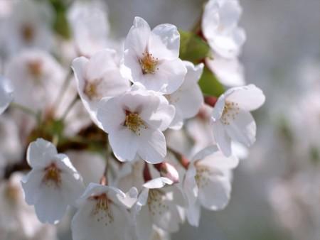 اجمل صور زهور (1)