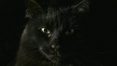 احلى صور قطط (1)