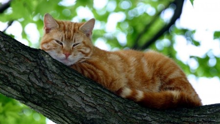 احلى صور قطط (3)