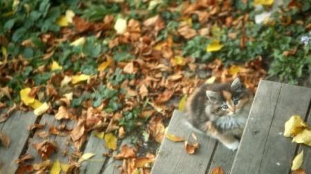 احلى قطه (2)