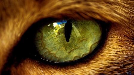 احلى قطه (3)