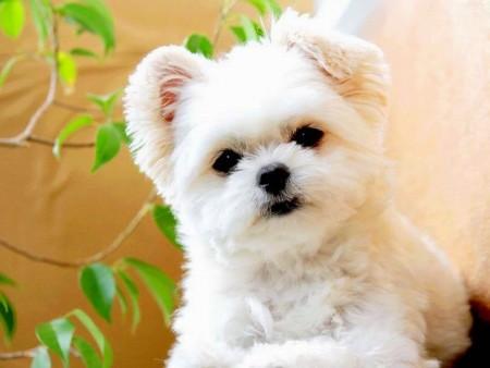 الكلاب (1)