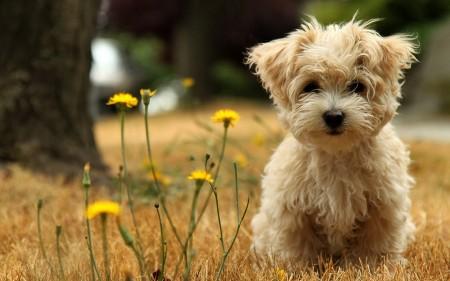 الكلاب (2)