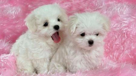 الكلاب (3)