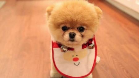 انواع كلاب (1)