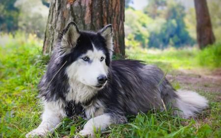 انواع كلاب (2)