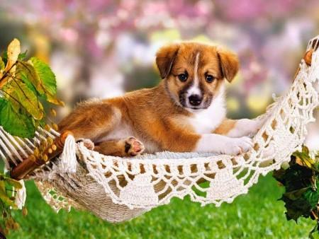 انواع كلاب (3)