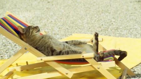 تحميل صور قطط (3)