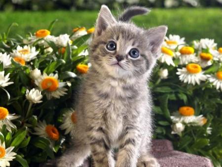 تنزيل صور قطط (1)
