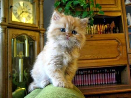 تنزيل صور قطط (2)