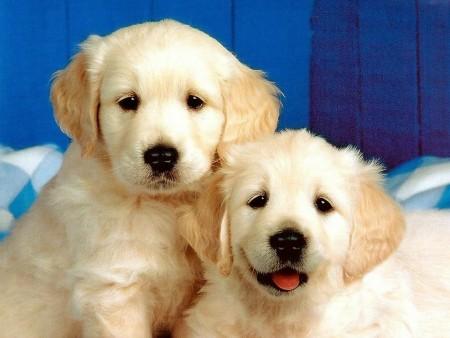 خلفيات كلاب (1)