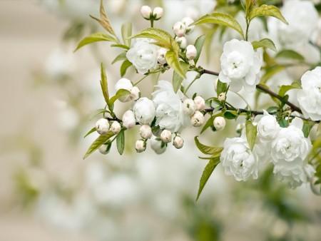 صور زهور وباقات ورد جميلة أجمل ورود الحب ميكساتك